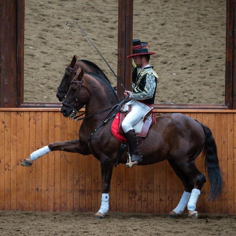 Dracula Horse